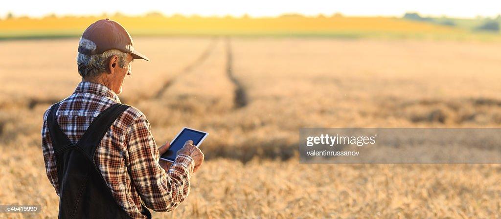 Farmer examinig wheat field status with digital tablet : Foto de stock