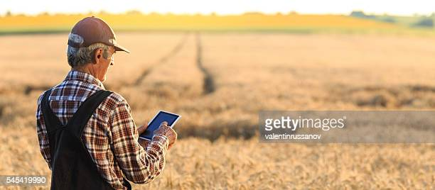 Farmer examinig wheat field status with digital tablet