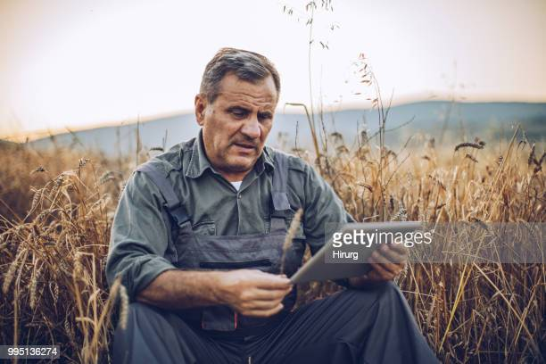 farmer examinig wheat field status with digital tablet - farm worker stock pictures, royalty-free photos & images