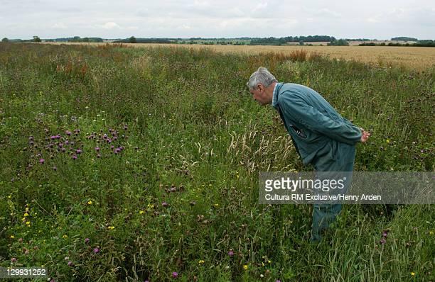 Farmer examining field of flowers