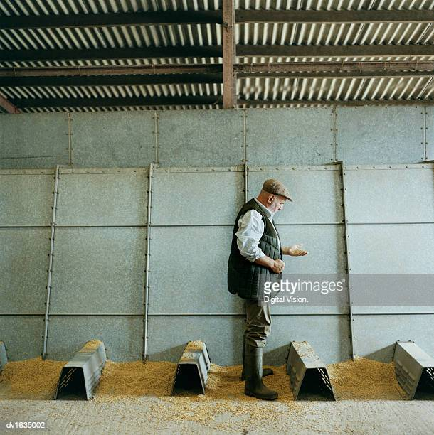farmer examining grain, stood in a metallic barn - sideburn stock pictures, royalty-free photos & images