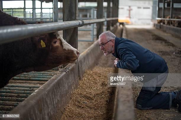 Farmer examining his herd