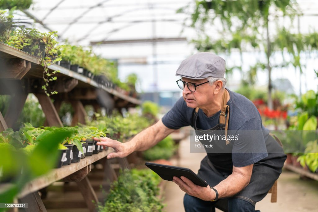 Farmer Examining Plants Using Digital Tablet : Stock Photo