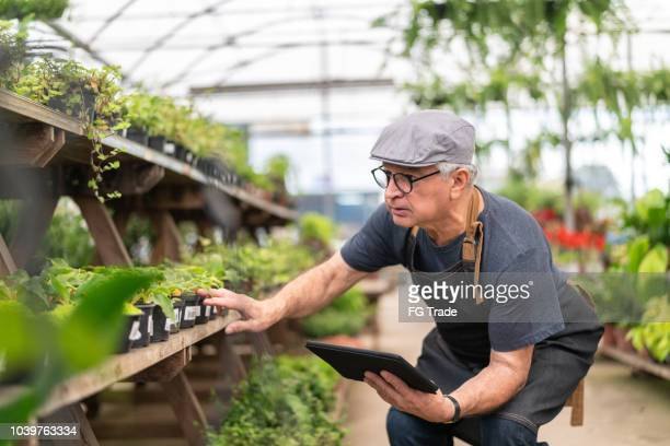 farmer examining plants using digital tablet - market retail space stock pictures, royalty-free photos & images