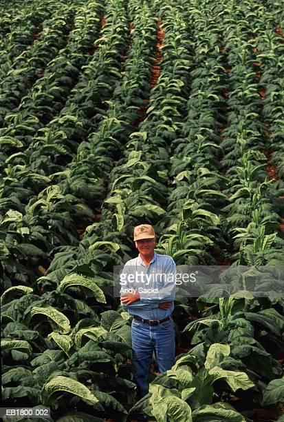 Farmer examining ripe tobacco leaves for quality, Kentucky, USA