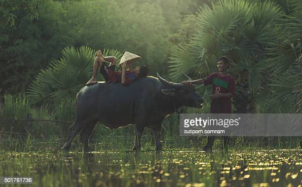 farmer family of happy time. - myanmar culture stock pictures, royalty-free photos & images