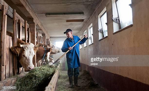 農家フィーディング牛のバーン
