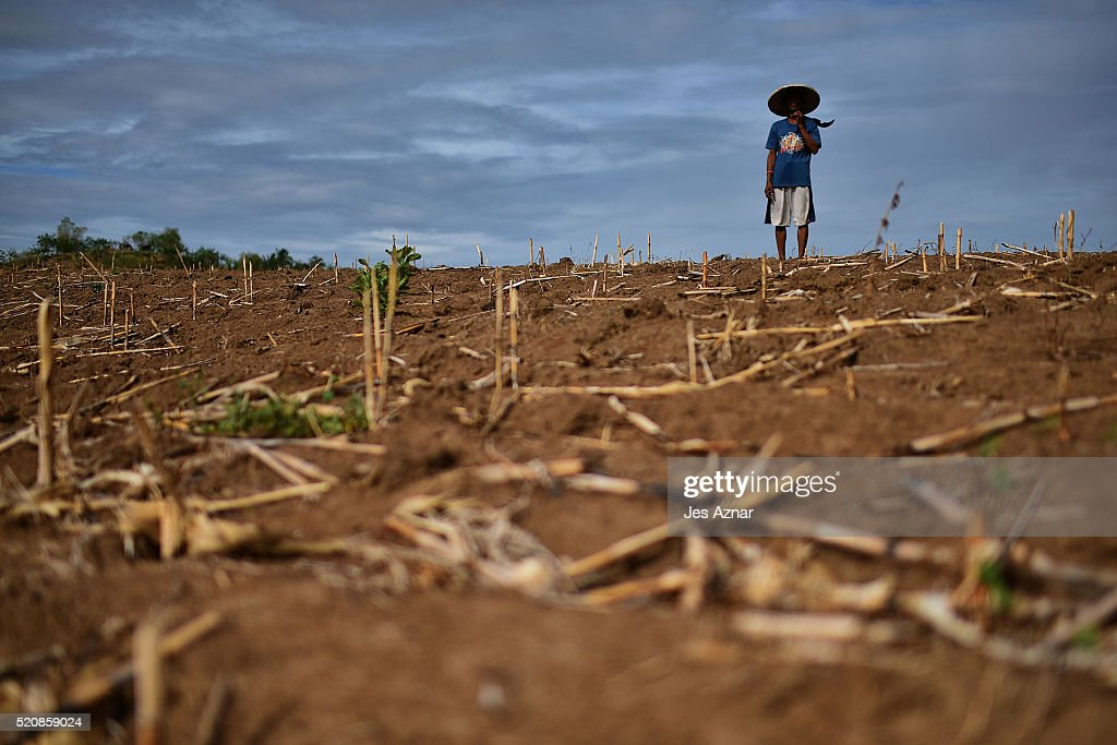 COTABATO, MINDANAO, PHILIPPINES - APRIL 10: Farmer Felicito Tomas, 46, looks at his dried up corn field in the agricultural mountain area of Kabacan on April 10, 2016 in Cotabato, Mindanao, Philippines. The heatwave brought on by the El Nino weather phenomenon has severely affected food and water supplies in many countries. Based on reports, 85 percent of the whole Philippines will experience the effects of the drought and around 12 million Filipinos who rely on agriculture will directly be affected. In southern Philippines, where farmers lacked agricultural infrastructures and farming subsidies, the population faced impending hunger during the drought and two demonstrators were left dead and dozens of people injured after police dispersed thousands of drought-hit farmers in early April.