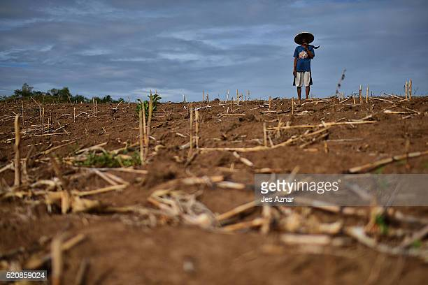 COTABATO MINDANAO PHILIPPINES APRIL 10 Farmer Felicito Tomas looks at his dried up corn field in the agricultural mountain area of Kabacan on April...