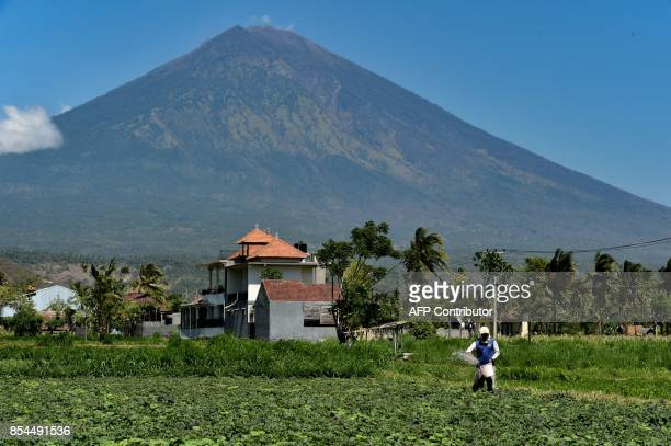A farmer fertilizers his field at the base of Mount Agung volcano in Karangasem Regency on the Indonesian resort island of Bali on September 27 2017...