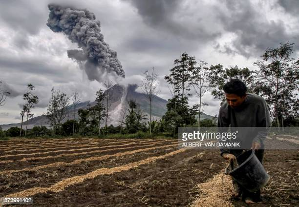TOPSHOT A farmer fertilizes his farm as Mount Sinabung volcano erupts as seen from Karo in North Sumatra province on November 14 2017 Mount Sinabung...