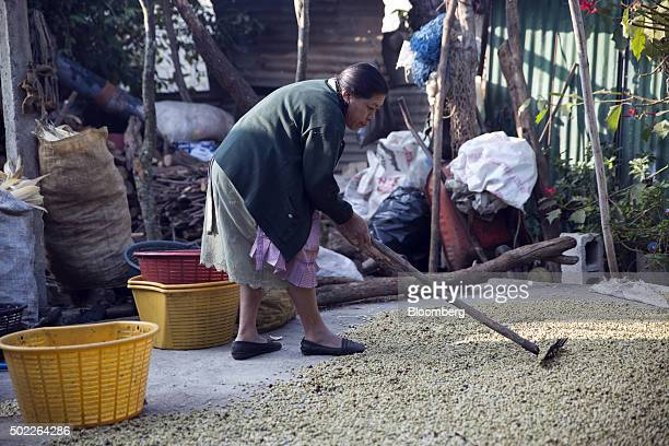 Farmer Francisca Paredes Hernandez spreads coffee beans to dry with a rake on her patio in San Miguel Escobar Guatemala on Thursday Dec 17 2015...