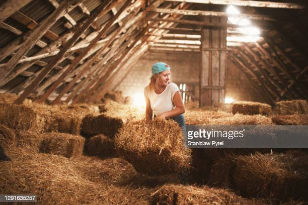 farmer girl stacking hay bales in barn - effort stock pictures, royalty-free photos & images