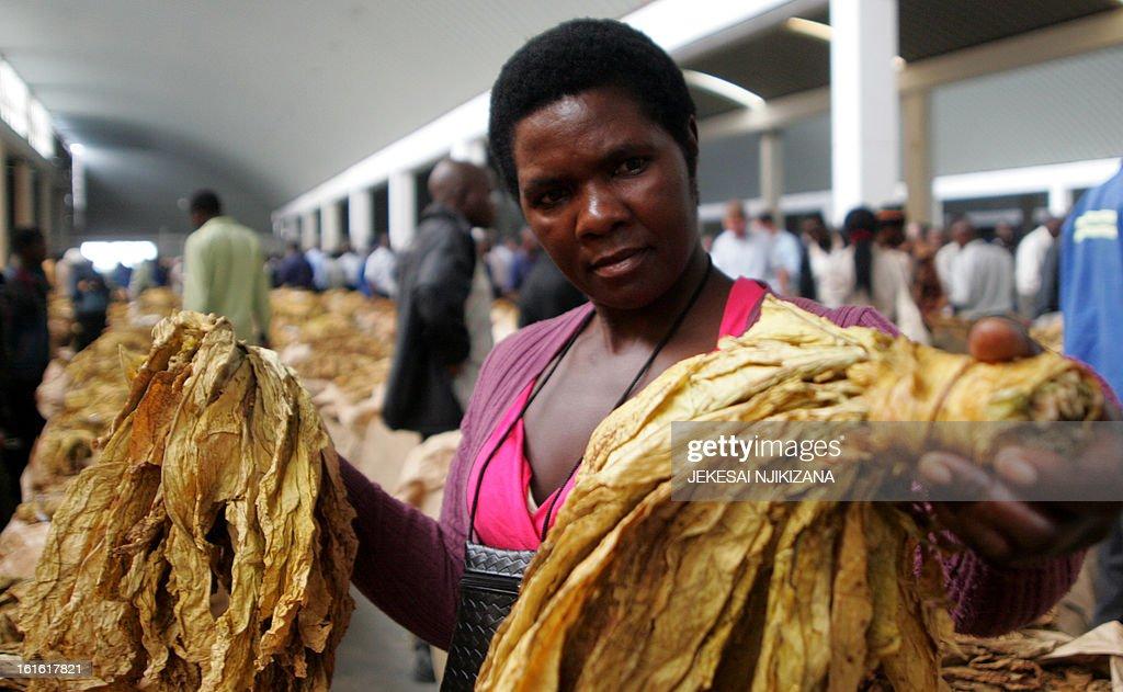ZIMBABWE - AGRICULTURE - TOBACCO : News Photo