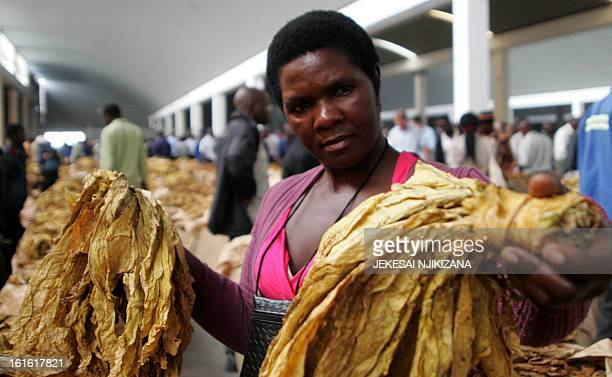 A farmer gives final inspectiont to his tobacco leaves just before an auction during the opening day of the tobacco selling season at Boka Sales...