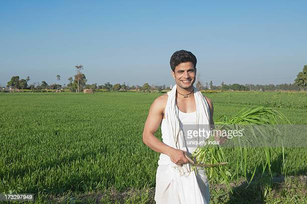 Farmer harvesting crop with a sickle, Sonipat, Haryana, India