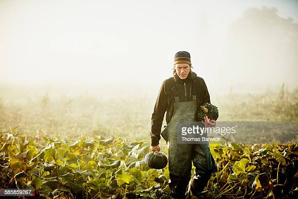 Farmer harvesting organic squash in field