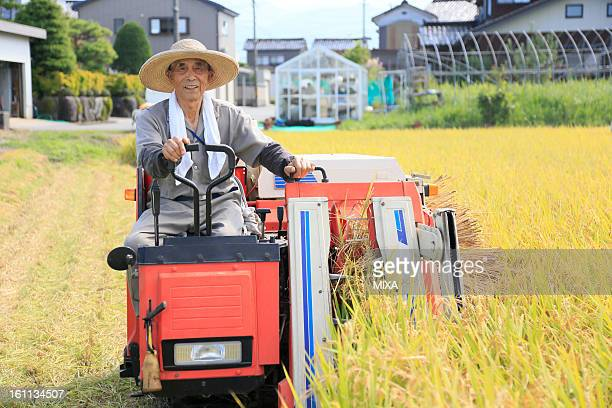 Farmer Harvesting Rice with Combine
