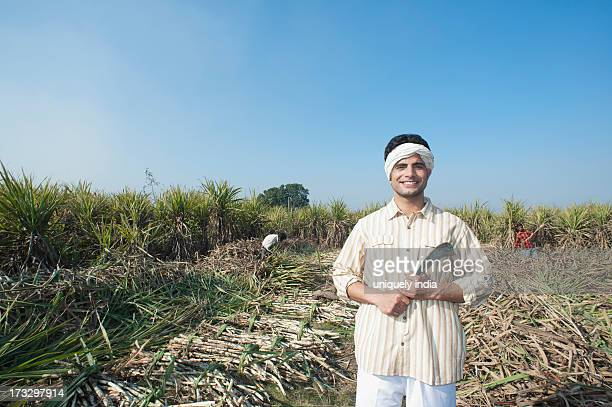 Farmer harvesting sugar cane field with a sickle, Sonipat, Haryana, India