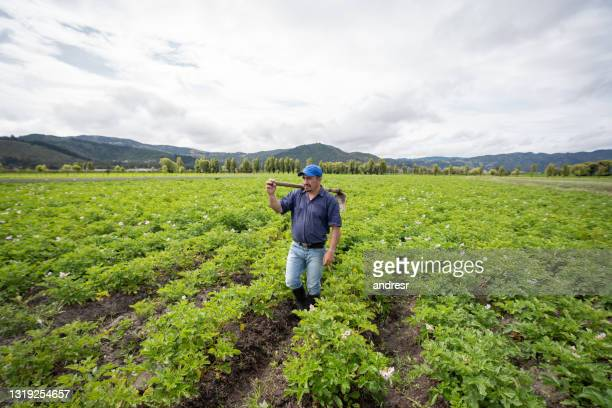 farmer harvesting the land at his farm using a mattock - south america stock pictures, royalty-free photos & images
