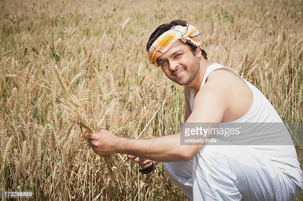 Farmer harvesting wheat crop, Sohna, Haryana, India