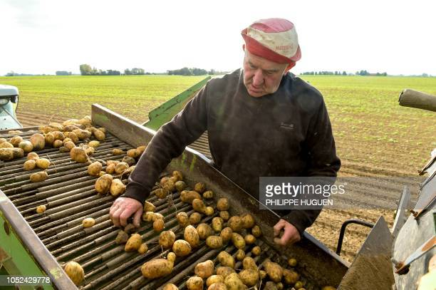 A farmer harvests potatoes in a field in Rexpoëde northern France on October 15 2018 as the harvest reduced following summer drought
