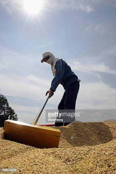 A farmer harvests rice in Tanjung Karang Selangor Malaysia on Friday June 1 2007 The US government said Malaysia must open its rice market to reach a...