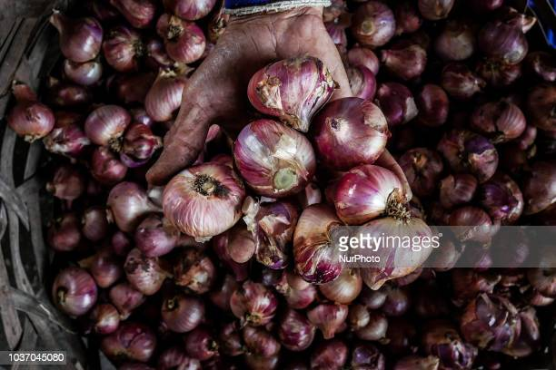 A farmer harvests shallots at the feet of Mount Batur Kintamani in Bali Indonesia on September 21 2018