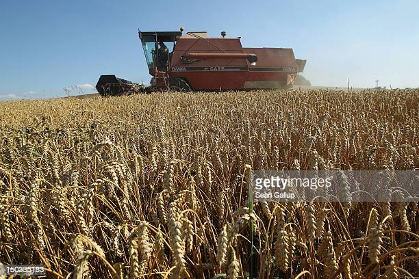 A farmer harvests wheat on August 15 2012 near Selbitz Germany Selbitz lies in the Upper Franconia region of northern Bavaria and is traditionally...