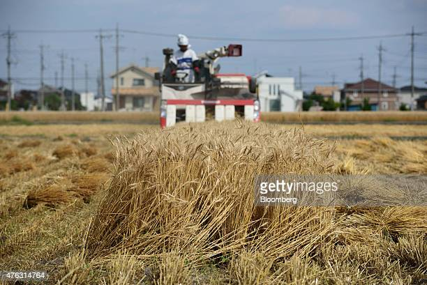 A farmer harvests wheat with a Yanmar Co combine harvester in Chiyoda Town Gunma Prefecture Japan on Sunday June 7 2015 Japan's gross domestic...