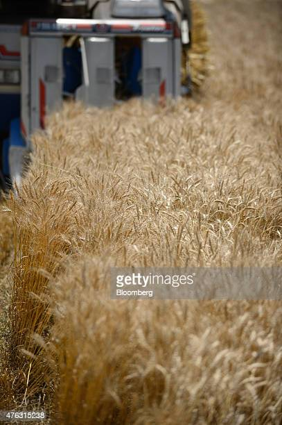 A farmer harvests wheat with an Iseki Co combine harvester in Chiyoda Town Gunma Prefecture Japan on Sunday June 7 2015 Japan's gross domestic...