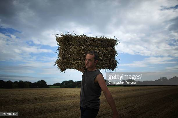 Farmer harvests winter barley and straw in a Cheshire field on August 12, 2009 in Knutsford, United Kingdom. The UK government has issued a warning...