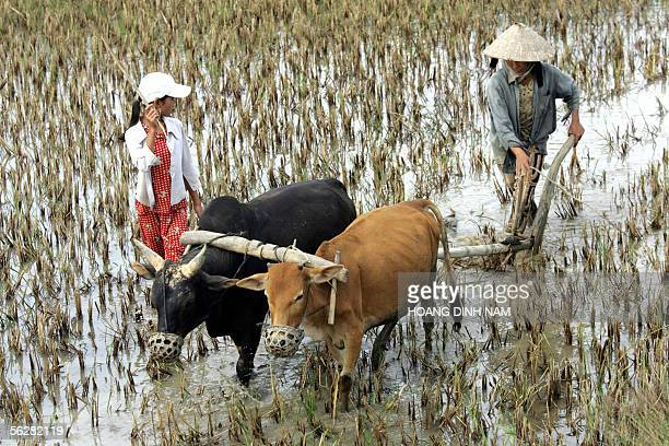 A farmer helped by her daughter ploughs a rice field near to the site of the future refinery in Dung Quat in the central coastal province of Quang...