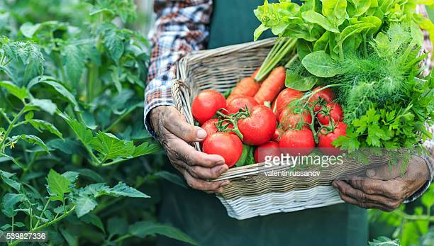 Farmer holding a basket with fresh vegetables, close-up