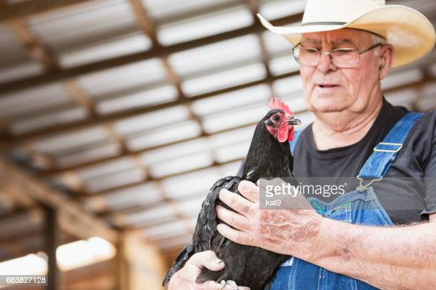 farmer holding a rooster - poultry stock photos and pictures