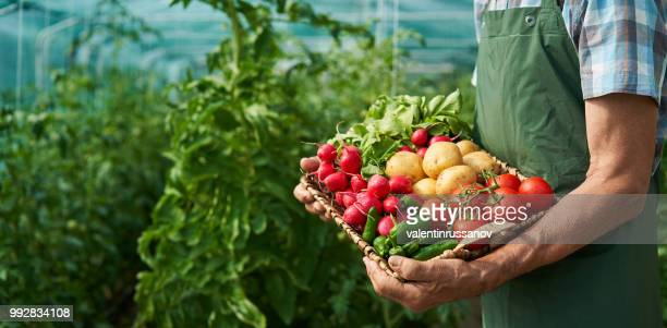 farmer holding basket with vegetables - vegetarian food stock pictures, royalty-free photos & images