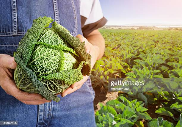Farmer holding cabbage