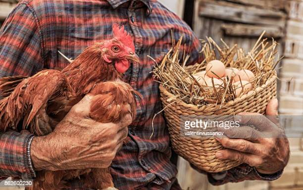 Farmer holding chicken and basket with eggs