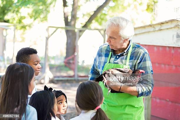 Farmer holding chicken, teaching children during farm field trip