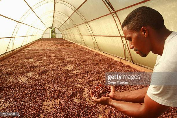 Farmer Holding Drying Cacao Beans at a Fair Trade Cooperative