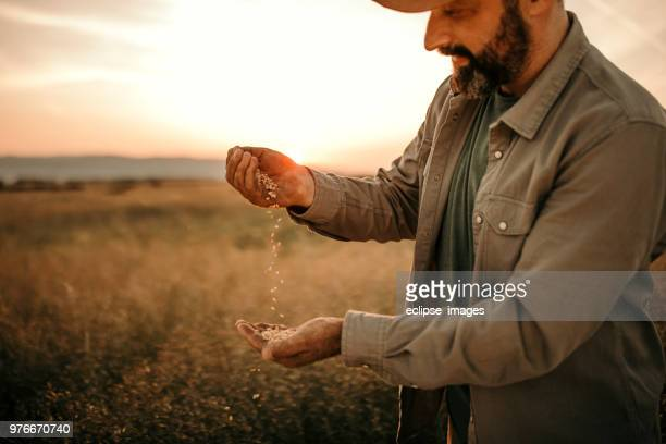 farmer holding grain - agronomist stock pictures, royalty-free photos & images