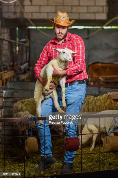 farmer holding lamb in barn - medium group of animals stock pictures, royalty-free photos & images