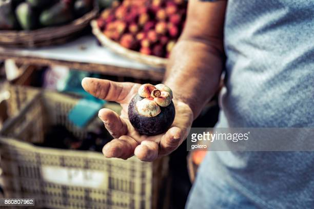 farmer holding mangosteen fruit in his hand - mangosteen stock photos and pictures