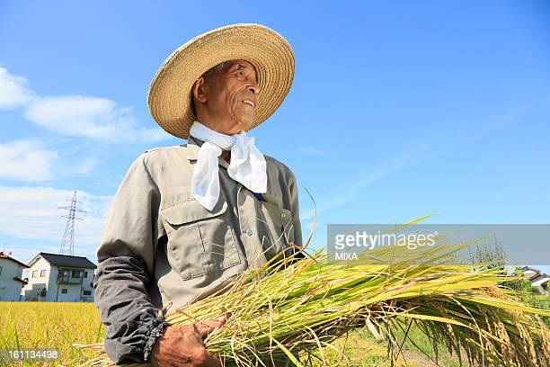 Farmer Holding Rice Ear and Standing in Rice Paddy in Autumn