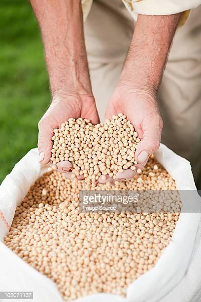 Agricoltore con soia