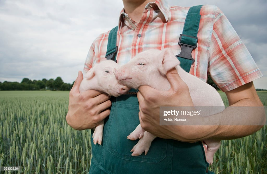 Farmer holding two pigs : Stock Photo