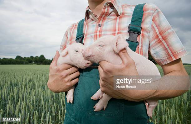 farmer holding two pigs - pig stock pictures, royalty-free photos & images