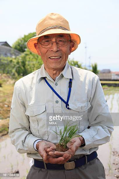Farmer Holding Young Rice Plants