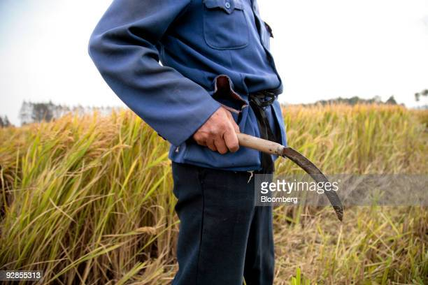 A farmer holds a sickle at a rice farm at the site of a future Walt Disney Co theme park in Shanghai China on Friday Nov 6 2009 Walt Disney's newest...