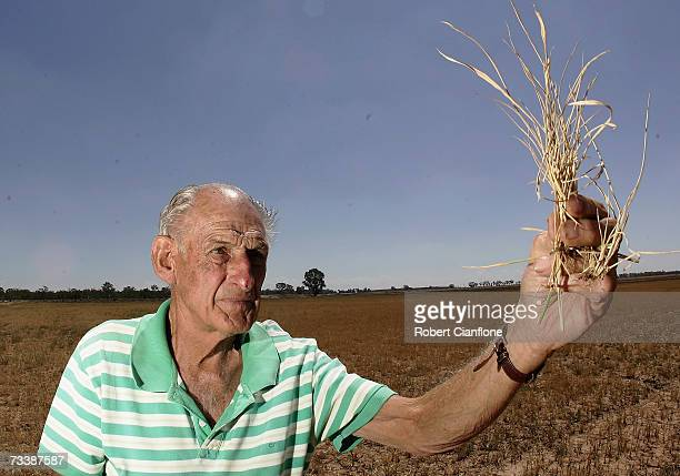Farmer Hunter Lansdale shows his rice crop that has been decimated by the drought on February 22 2007 in Deniliquin Australia The local government...